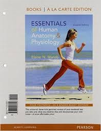 Human Physiology And Anatomy Book Human Anatomy Physiology By Marieb 11th Edition Direct Textbook
