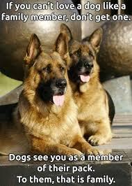 australian shepherd quotes german shepherd quotes loyalty puppys german shepherd t shirts