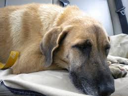 dog euthanasia when to put your dog is it really the time