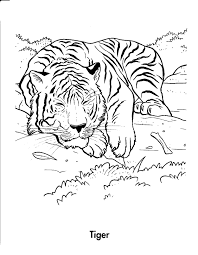 coloring page tiger good lion color page tiger color page plate