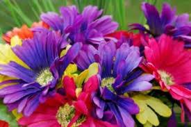 gerbera colors gerbera bridal bouquets lovetoknow