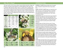 native plant definition bees an identification and native plant forage guide bee and