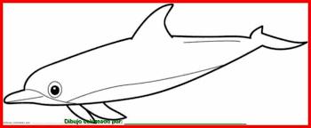 imagenes animales acuaticos para colorear dibujo de animales marinos para colorear e imprimir
