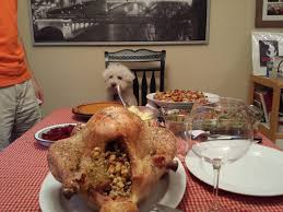 thanksgiving dinner fit for a bichon frise married with bichons