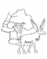 moose coloring pages getcoloringpages com