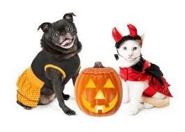 happy halloween bullard marks veterinary medical center