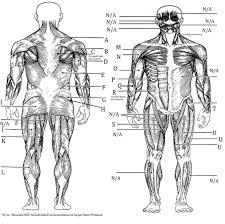 muscles used in accordance to 1 20 minute workout u2022 true u fitness