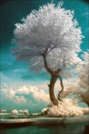 105 best trees images on nature a tree and