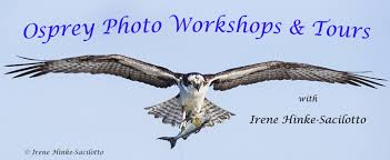 New Mexico wildlife tours images Bosque wildlife new mexico photo workshop osprey photo workshops jpg