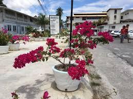 georgetown flowers guyana flowering georgetown in april 2016 by francis quamina