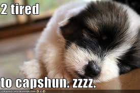 Tired Dog Meme - 2 tired to capshun zzzz i has a hotdog dog pictures funny