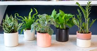 plants that don t need sunlight to grow love plants but no sunlight these 15 plants can be ur best buddy