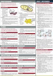 new leishmania virulence strategies microbiology