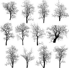 dead tree without leaves vector illustration sketched clip art