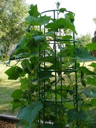 Make Your Own Cucumber Trellis 241 Best Home Gardening Images On Pinterest Cucumber Trellis