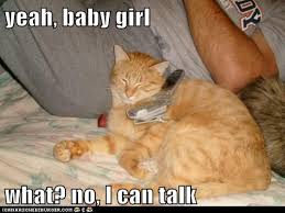 Baby On The Phone Meme - lolcats cell phone lol at funny cat memes funny cat pictures