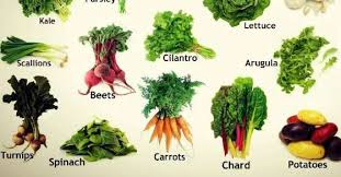 edible pictures 40 edible plants that will grow in partial shade realfarmacy