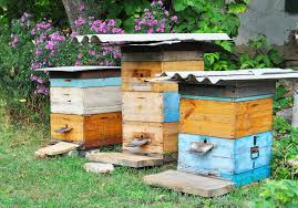 The Backyard Beekeeper Why Backyard Beekeeping Is Good For You And Your Home Homes Com