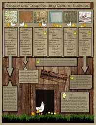 Best Backyard Chicken by Quick Guide To Common Brooder And Coop Bedding Materials