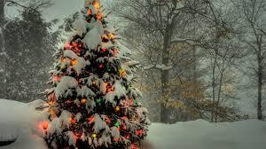 50 beautiful christmas tree wallpapers christmas tree wallpaper