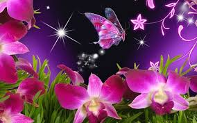 butterfly flower pictures of purple flowers and butterflies hdwall