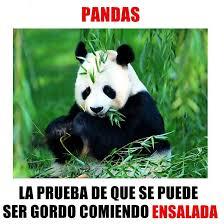 Memes De Pandas - panda memes lo más gracioso y nuevo del internet