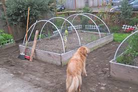 dog proof fence photo battery powered electric for dog proof