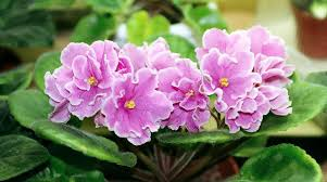 Indoor Flower Plants 20 Indoor Plants That Can Improve Your Office Environment