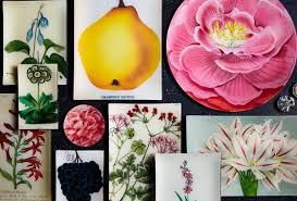 fruits flowers fruits flowers foliage derian company inc