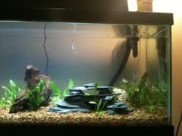 Aquarium Decoration Ideas Freshwater Diy Refuge Caves Ideas Page 2 Aquarium Forum