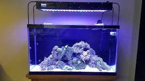 sb reef lights review budget doesn t exist in this hobby brian s 45g build page 13