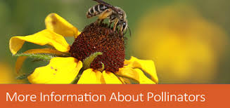 more information about pollinators nrcs