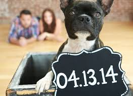 Save The Date Signs 26 Cutest Save The Date Signs For Dogs