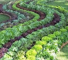 Edible Garden Ideas Great Ideas For Edible Garden Landscaping Landscapers Dallas