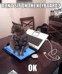 Cat Laptop Meme - laptop sits on cat by snajath meme center