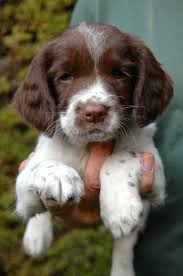 best 25 puppy face ideas on pinterest puppy eyes who is