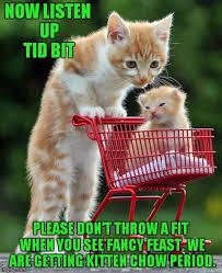 Cute Kitten Memes - parenting imgflip