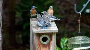 ethics audubon
