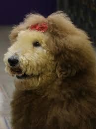 lion dogs denim dogs fashion blast ambassadorable qb the happy huggable