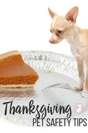 thanksgiving pet photos thanksgiving pet safety tips irresistible pets