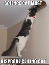 Ceiling Cat Meme - science caturday ceiling cat is just a myth the finch and pea