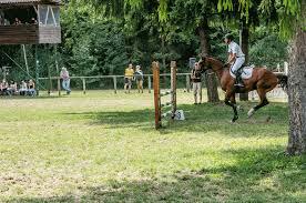 jumping horse wikipedia