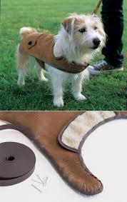 diy dog halloween costume 124 best dog costumes images on pinterest animals puppies and
