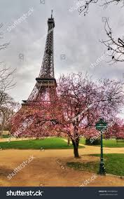 Beautiful Eiffel Tower by Beautiful Pink Blossom Tree Front Eiffel Stock Photo 343789652