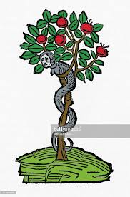 tree symbolism serpent in the apple tree christian symbolism engraving stock
