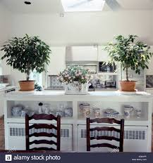 green plants in terracotta pots on white cupboard with blue and