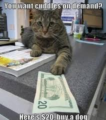 Cute Cats Memes - you want cuddles on demand cat memes cat planet cat planet
