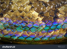 color communication colors and moods shutterstock stock photo snake skin