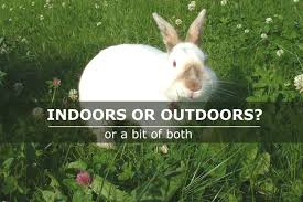 raise rabbits outdoors top 10 rabbit breeds for outdoors