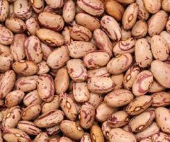 cuisiner les haricots coco haricots secs coco 1 kg catarino